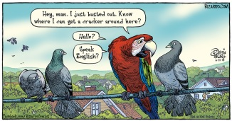 parrot-busted-out-bizarro