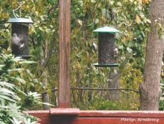 180-Feeding Birds-Sept_092220_065