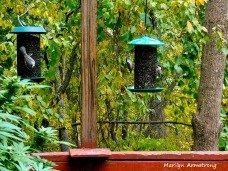 180-More-Hungry-Birds-Sept_092220_064