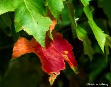 180-One Red Leaf_091220_019