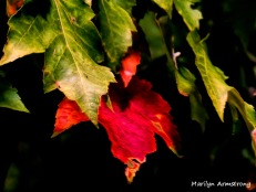 180-One Red Leaf_091220_023
