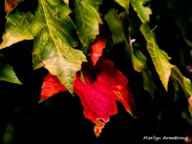 180-One Red Leaf_091220_023
