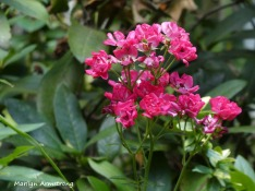 180-Pink-Roses_090120_004