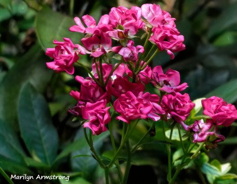 180-Pink-Roses_090120_009