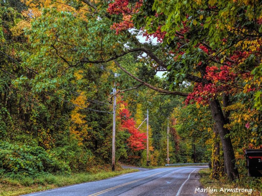 300-aldrich-early-foliage-mar_092420_129