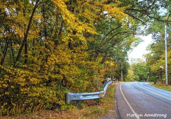 300-aldrich-early-foliage-mar_092420_134