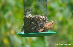 300-big-woodpecker-and-a-wren-birds-9-14_091420_071