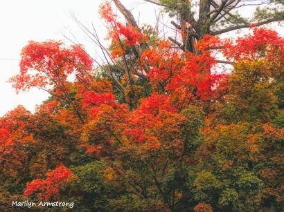 300-early-foliage-mar_092420_047