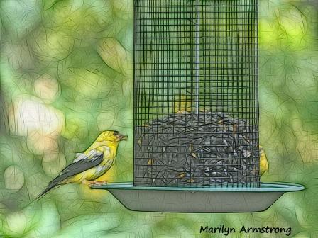 300-goldfinches-birds-9-14_091420_047