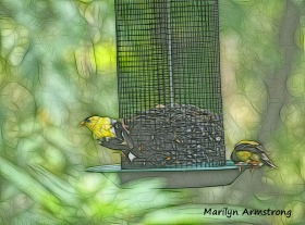 300-goldfinches-birds-9-14_091420_053