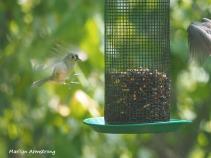 300-landing-patterns-birds-9-14_091420_010