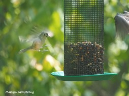300-landing-patterns-birds-9-14_091420_010