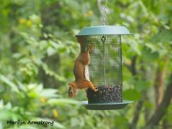 300-red-squirrels_091120_031