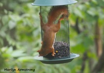 300-red-squirrels_091120_039