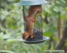 300-red-squirrels_091120_055