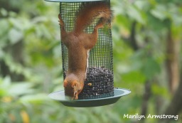 300-red-squirrels_091120_056