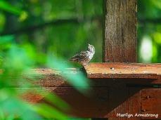 300-sparrow_083020_102