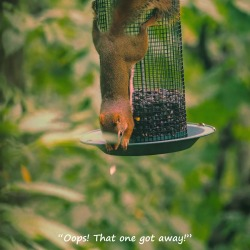 300-square-red-squirrels_091120_048