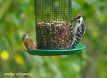 300-teacher-student-birds-9-14_091420_094