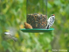 300-three-birds-9-14_091420_088
