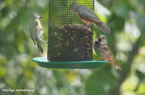 300-three-different-birds-9-14_091420_028