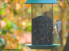 300-tufted-titmouse-9-29_092820_115
