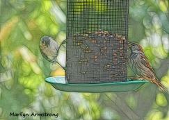 00-tufted-titmouse-sparrow-birds-9-14_091420_012