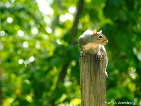 300-watching-wounded-squirrel_9-14_091420_126