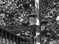 Photo: Garry Armstrong - Bird feeders from below (see the birds?)