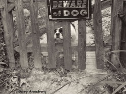 Photo: Garry Armstrong -Duke at the gate