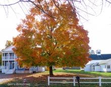 180-Golden-Tree-Gar-Downtown_102320_007