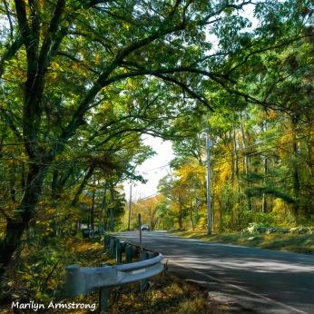 180-Square-Car-Coming-Aldrich-October-Foliage_101920_167