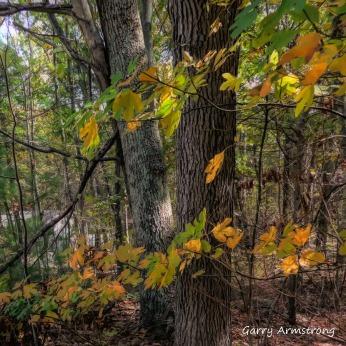 180-Square-Garry-10-19-Foliage__101920_006