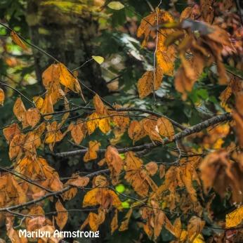 300-autumn-leaves-fall-9-29_092820_024