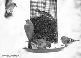 300-bw-flying-chickadee-etc-october-snow-bids_103020_0043
