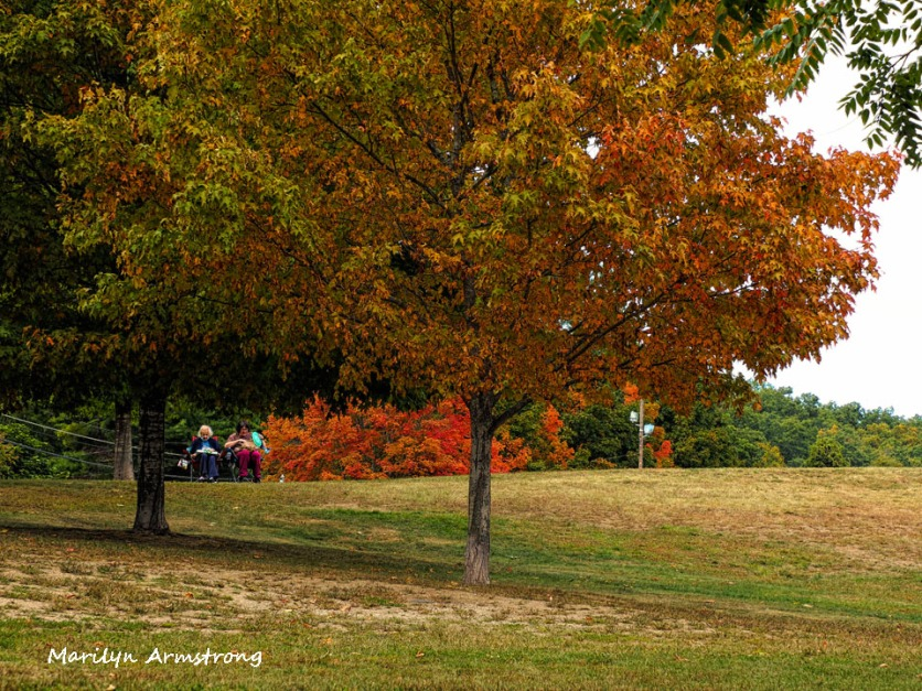 300-early-foliage-mar_092420_042