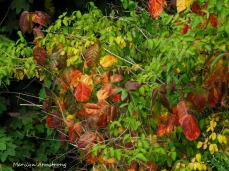 300-early-foliage-mar_092420_068