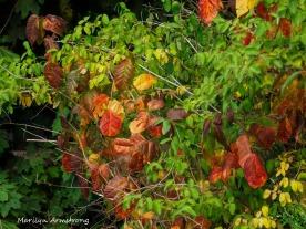 300-early-foliage-mar_092420_068