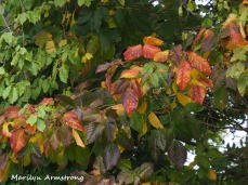 300-early-foliage-mar_092420_069