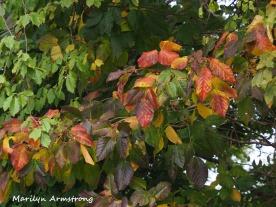 300-early-foliage-mar_092420_069