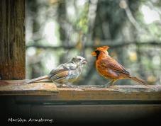 300-mama-orange-cardinal-baby_100420_002