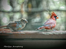 300-mom-orange-cardinal-bsby_100420_014