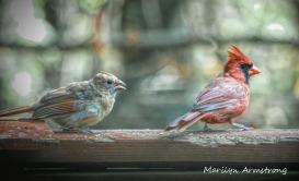300-mom-orange-cardinal-bsby_100420_015