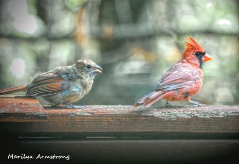 300-orange-cardinal-bsby_100420_015