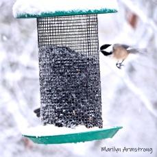 300-square-chickadee-flying-october-snow-bids_103020_069