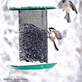 300-square-chickadee-titmouse-flying-october-snow-bids_103020_045