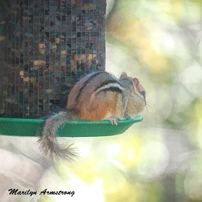 300-square-least-chipmunk_101720_027