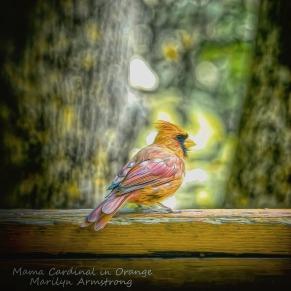 300-square-mama-or-dad-orange-cardinal_100420_020