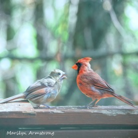 300-square-orange-cardinal-mother-bsby_100420_002