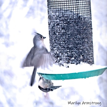 300-square-titmouses-flying-october-snow-bids_103020_194